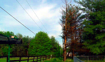 We specialize in all of your outdoor needs for Trees for tight spaces